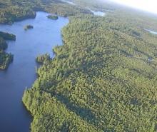 Industrie forestière : Ottawa ne doit pas favoriser l'Ontario au détriment du Québec