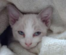 Chat sommeil 15 à 18 heures par jour