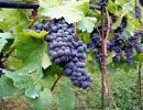 Production vin France Italie tonnes