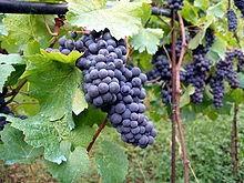 Production vin France Italie tonnes