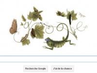 Maria Sibylla Merian : Google décerne un doodle à Maria Sibylla Merian